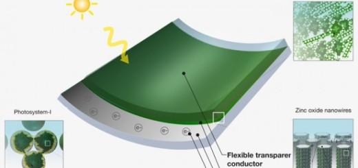 grass-solar-power1-640x353